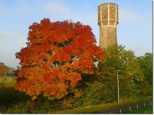 Boom in herfstkleuren bij watertoren