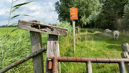 Hek wandelpad polder Groot Koninkrijk te 's-Gravendeel