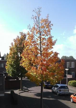 Herfst in de Roodenburg Vermaatstraat te 's-Gravendeel