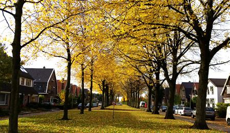 Herfstkleuren aan de Korte Smidsweg in 's-Gravendeel