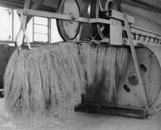 Foto eind vlasturbine met gezwingeld vlas